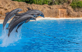 Dolphins jumping over a rope during a park show