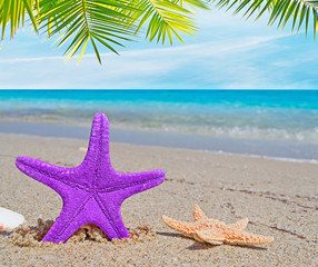 palm over a purple starfish