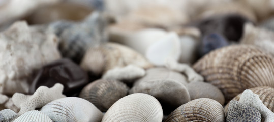 shells and conches texture