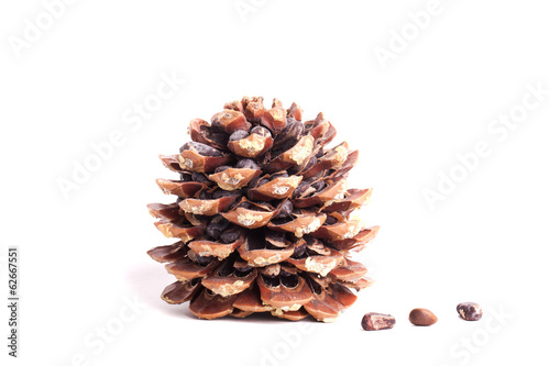 Natural pine cone isolated on white background