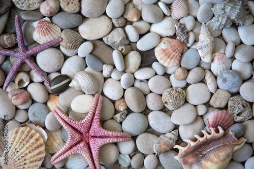 mata magnetyczna Piękny egzotyczny muszli i kamieni