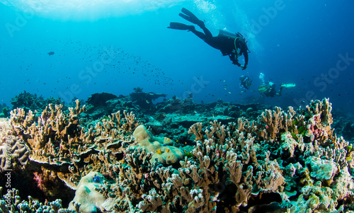 obraz lub plakat reef4