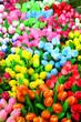 Pays-bas - Tulipes en bois,