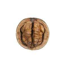 isolated walnut