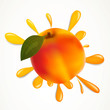 Vector Illustration of an Apricot Splash