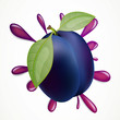 Vector Illustration of an Plum Splash