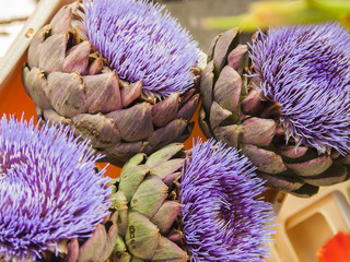 Blossoming artichokes in a box