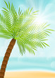 Summer vacation background with palm tree