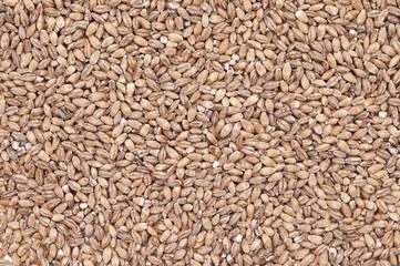 Organic barley