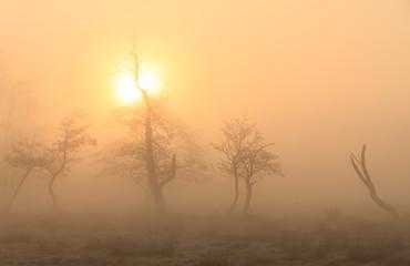 Rural landscape on a foggy spring morning.