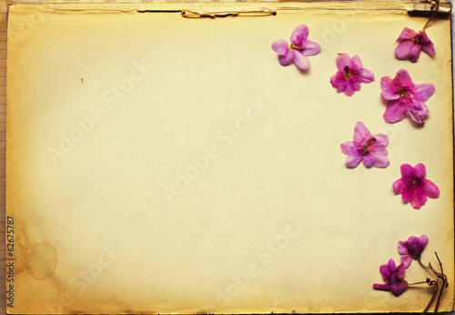 Dried flowers on old-time paper