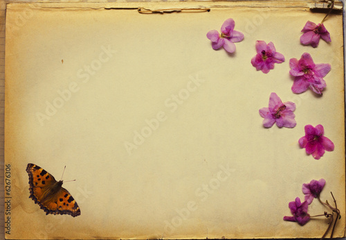 Dried flowers and  butterfly on old-time paper