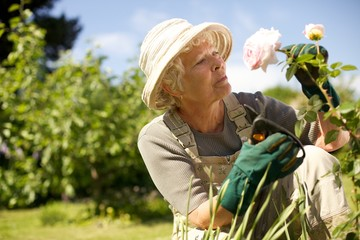 Senior woman checking flowers in garden