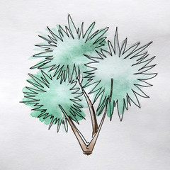 Illustration of evergreen tree. Decorative watercolor palm.