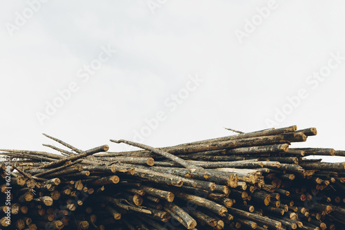 A Stack Of Cut Timber Logs, Lodge Pole Pine Trees At A Lumber Mill.