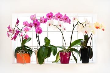 Collection d'orchidée sur un rebord de fenêtre