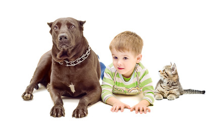 Dog, boy and kitten