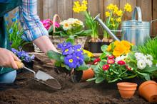 "Постер, картина, фотообои ""Gardener planting flowers"""