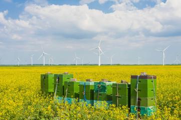 Deutschland, Schleswig -Holstein, Ansicht der gestapelten Kisten in Feld mit Windkraftanlagen im Hintergrund