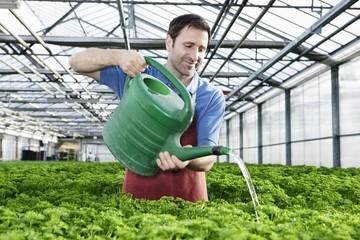 Deutschland, München, Mann im Gewächshaus gießen Petersilie Pflanzen