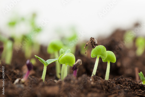 young green sprouts