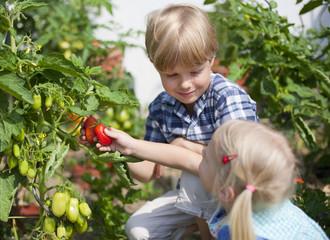 Deutschland, Bayern, Junge und Mädchen, pflücken Tomaten im Garten