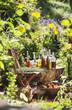Österreich, Salzburg, Flaschen mit Kräuterölen im Garten
