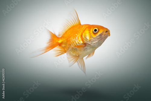 Gold fish on background