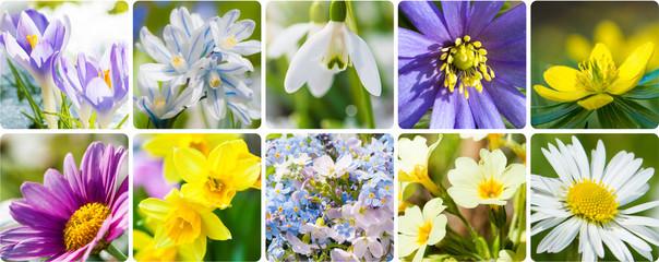 Frühlingsblumen - Collage