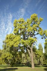 Sunny autumn tree in the park