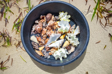 Beautiful colorful seashells in a basin on a tropical island