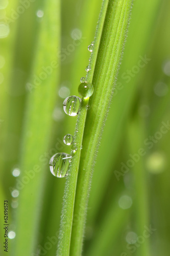 Dew drops on green grass. Macro