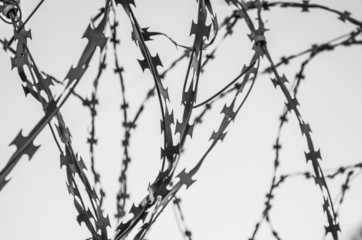 wire, barbed, sharp, security, fence, system, metal
