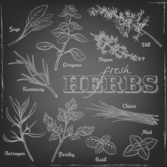 Illustration of herbs on a chalkboard