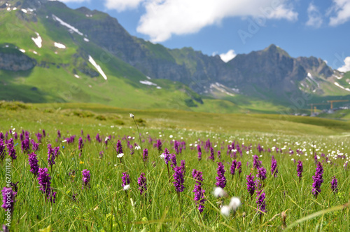 Alpine meadow. Melchsee-Frutt, Switzerland