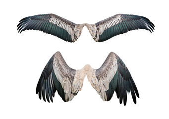 Set of wing