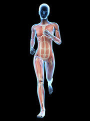 woman running - visible anatomy of the muscles