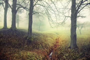 Mysterious foggy scene
