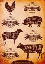 Ilustracja schemat cięcia tuszek kurcząt, świń, krów, jagnięciny