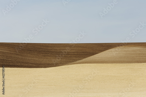 Wheat Fields In Washington. A Ripe Crop And Undulating Landscape.