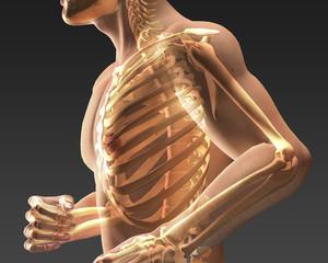 Corpo umano trasparente