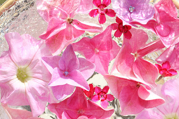 Beautiful, floral pink, background