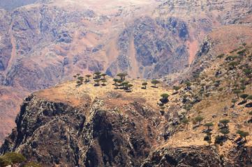 Yemen. Socotra island. Plateau Dixam
