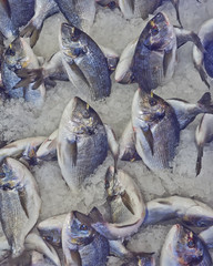 silver sea bream for sale at the central market