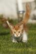 Strubbeliges Kätzchen