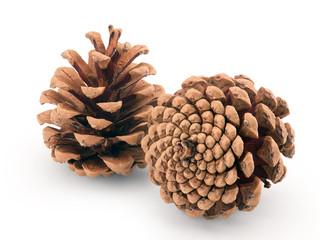 pine cones isolated