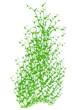 Spring in green  vector