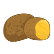 potato isolated illustration