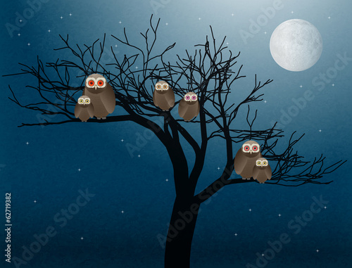 owls at night vector