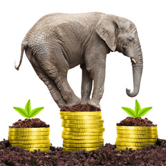Big Elephant on a growing pile of a golden money.